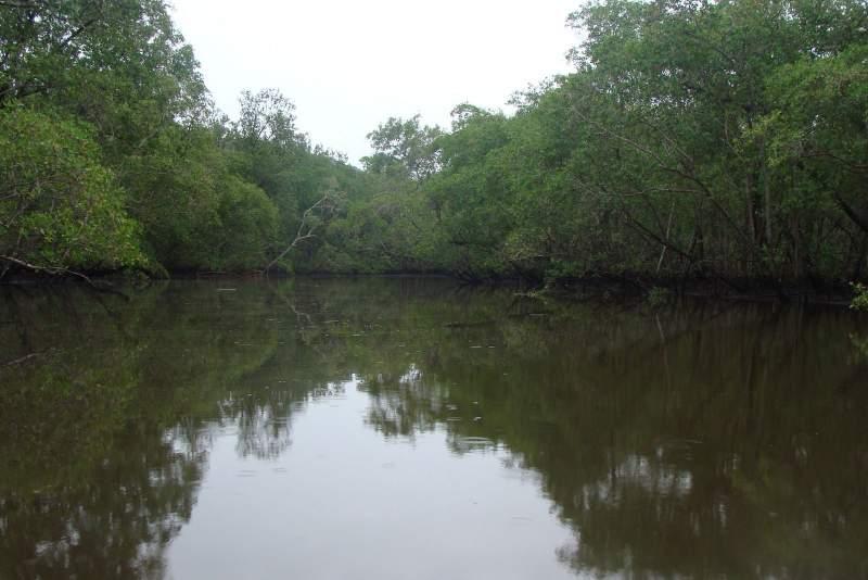 Bmamangua4jpg