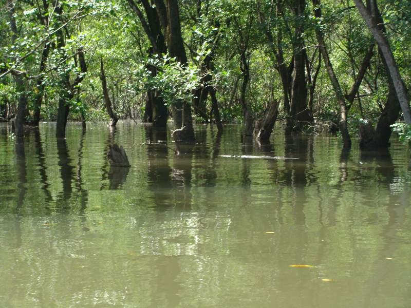 Bmamangua9jpg